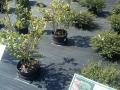 Vines Creek Nursery